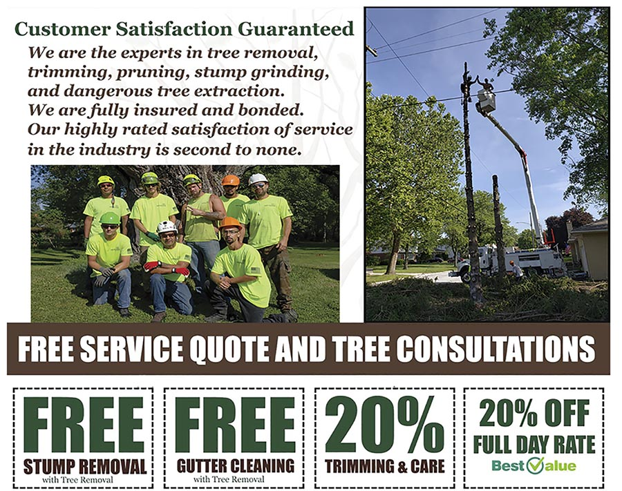 Find Out More About Tree Pruner In Haifa, Israel